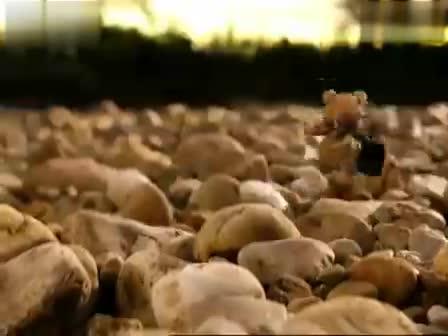 最轻松活泼可爱的汽车广告:福特小熊篇