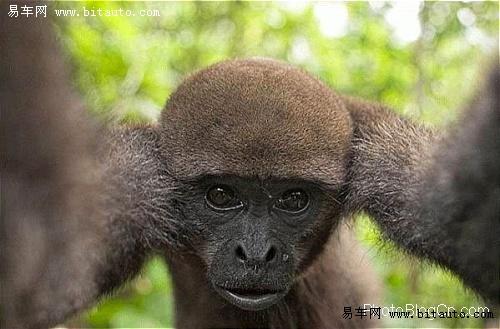 【动物千奇百怪的表情图片】-易车网bitauto.com