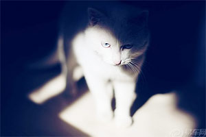 baby in shadow--文艺范儿猫咪