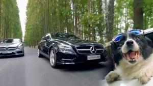 奔驰SL级/CLS级 狗狗的约会座驾