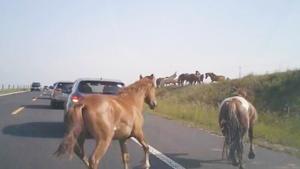 车队与马群