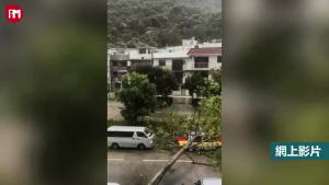 台风吹倒大树砸了路边出租车